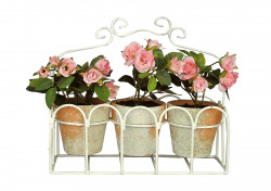 set de 3 rosiers miniatures et presentoir