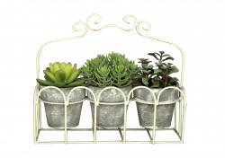 Jardinière de plantes grasses
