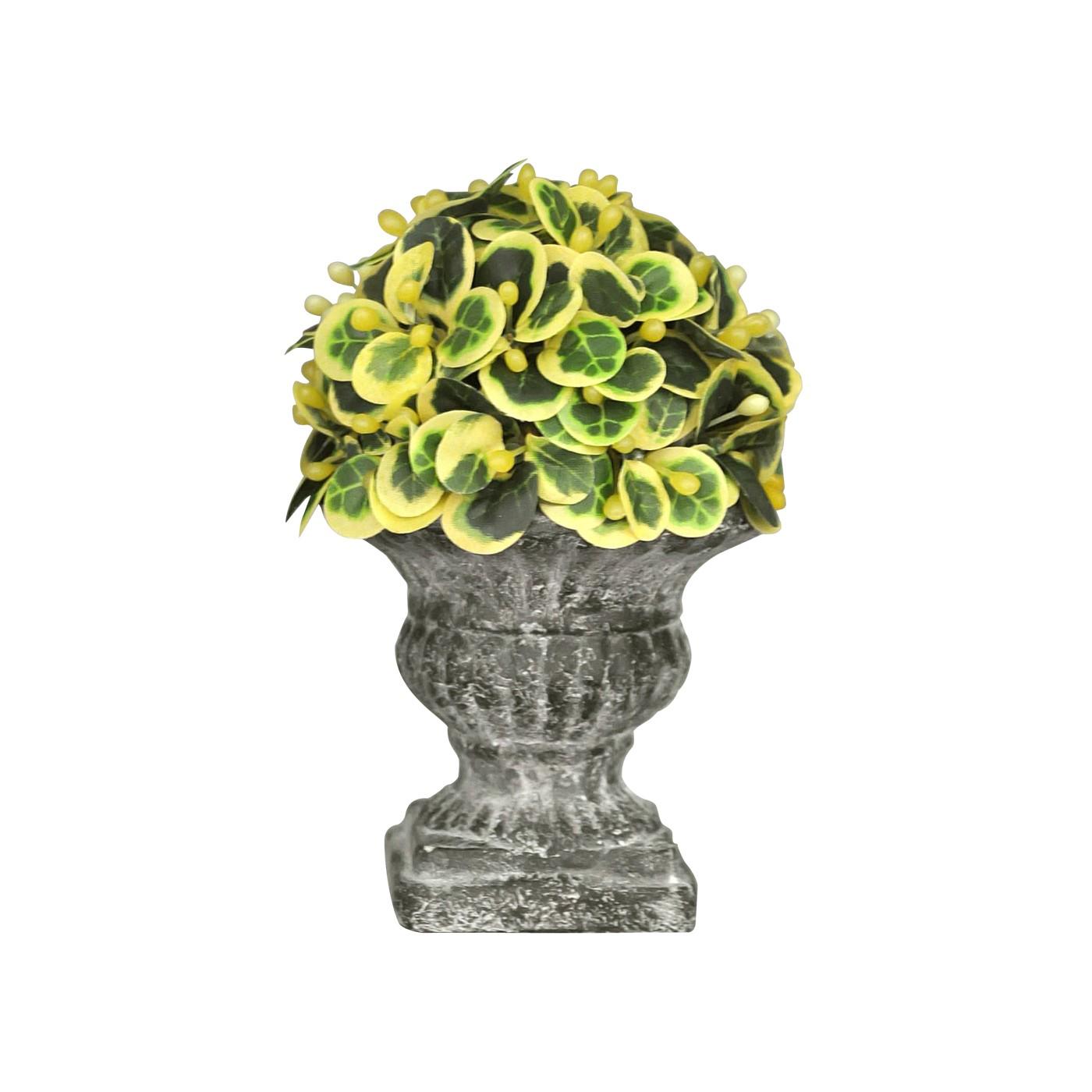 Les 6 mini topiaires d coratives demeure et jardin Plante decorative