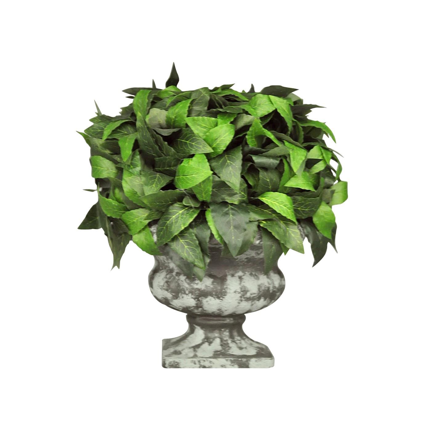 Laurier sur urne m dicis grise demeure et jardin for Plante decorative jardin